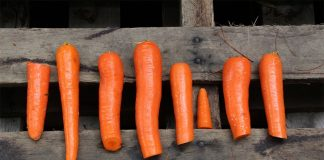 carrots diet wood